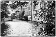 White roses (michael_hamburg69) Tags: brgge brugge bruges westflandern flandern belgien belgium flemish flanders belgique white roses flowers blossom blumen rosen rose brcke kanal wasser venedigdesnordens canal