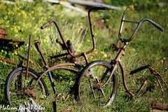 Chilhood memories ( 1970s dragster pushbikes ) (Malcom Lang) Tags: old sunlight flower green field grass bike wheel yellow canon toy outside toys outdoors handle daylight frames moss rust day dof play outdoor south ngc spoke spokes wheels australian nuts rusty bikes australia fork cobweb southern abandon forgotten ag frame dreams bolt bolts daytime rusting handlebar behind nut aussie 1970s grip peddle forks left southaustralia mal depth handlebars tyres tyre dragster paddock olden grips peddles southernaustralia chilhood pushbikes canonef canon180mm canon6d canoneos6d rustyancrusty malcomlang malcomlangphotos