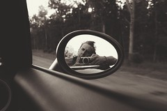 The Dunning Krueger Effect (Kevin LaCamera) Tags: road leica trip travel bw car mirror mini cooper selfie