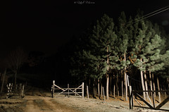 DSC_7089 (prebianca) Tags: nature nikon campo araucaria tamron churrasco gaucho cancela pinho d7000 noitelongexposure portoi prebianca