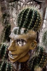 Cactus Head (Richard burtle) Tags: prickly prickle prick clone clonestamp photomontage photoshop cactus cacti plantpot pothead pot pottery sharp spike spikey spiked spikes