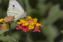 _MG_1691 (Arthur Pontes) Tags: flower color macro nature field spring big close flor deep mini borboleta deepoffield macrofotografia