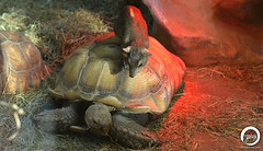 Care to take me for a ride? (7716galaxy) Tags: nature colors animals macro sea beach zoo park mushrooms tortoise chameleon mouse turtle sun sky water flying