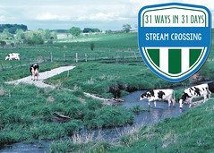StreamCrossingtweetgraphic (IowaNRCS) Tags: laurasg4projects cd6 macintoshhd nrcsia99204tif photocatalog catalog g4 hd lauras macintosh photo projects nrcsia990204tif 204 livestock waterquality crossing dairycows fencedstreamcrossing holstein pasture stream cows dairy fenced iowa