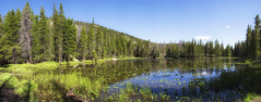 Nymph Lake Panoramic - Rocky Mountain National Park (Jeff.Hamm.Photography) Tags: nature rockymountainnationalpark rmnp emeraldlake trail trailhead nymphlake rockies mountains lake water wet reflections pine trees pano panoramic panorama nikon d610 24120mm photoshop niksoftware lilypad flowers hike hiking
