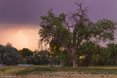 Thunderstorm In The Woods (Striking Photography by Bo Insogna) Tags: lightning tree storm rain cloud bolt sky landscape clouds nature weather summer natural night beautiful thunderstorm light outdoor spring season scenic stormy thunderbolt forest jamesinsogna