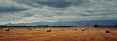 "This Is the Land of Plenty (Peter Kurdulija) Tags: geo:lat=3980893165 geo:lon=17646188736 geotagged newzealand nzl tikokino hawkesbay ongaonga new zealand ""hawkes"" bay landscape nature field rural agriculture countryside pastoral land haystack roll yellow hay storm sky mountain ruahine ranges kiwi peter kurdulija"