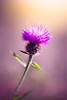 (ingrid.schnelle) Tags: canon eos 5d mark ii ef100mm f28l macro is usm plant flower nature outdoor dof details
