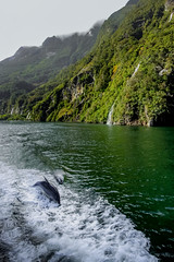 Milford Magic (robertdownie) Tags: mountains water ocean rocks new zealand green surfing dolphin mountain wake sound south island fjord waterfalls nz milford