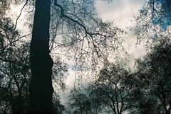 0086_04 (www.cjo.info) Tags: park england sky cloud plant tree london film 35mm garden flora kodak unitedkingdom rangefinder bloomsbury sillouette analogue yashica russellsquare geolocation kodakportra160 yashicalynx14 compactrangefinder geocity exif:make=fujiphotofilmcoltd geocountry camera:make=fujiphotofilmcoltd geostate camera:model=sp3000 exif:model=sp3000