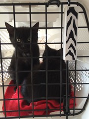Photo of The new kittens