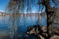 Lugano, Switzerland (petia.balabanova) Tags: travel blue sky lake snow tree water landscape switzerland traveling svizzera lugano paesaggio montains 2470mm nikond800