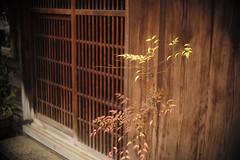 entrance (Typ250) Tags: leica jp  schneiderkreuznach  m240 leicam  typ240 xenonf2f5cm