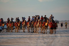 Camel riders, Cable Beach, Broome (jozioau) Tags: sunset beach kimberley camels broome riders sal70400g2