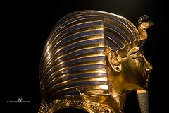 Tutankhamun's death mask - Side view (max.fontanelli) Tags: king treasure tomb egypt re tesoro tomba egitto oro tutankhamun pharaon golg faraone