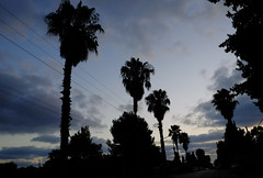 my neighborhood (Rodrigo Uriartt) Tags: landscape israel betyehoshua silouette pointofview pontodefuga blue dark goldenhour sunset clouds sky palms palm midleeast fujifilm xpro1