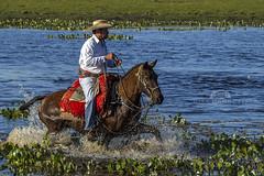 Pantanal (Rita Barreto) Tags: pantanal matogrossodosul brasil peo peopantaneiro cavalo baia aguap plantaaqutica