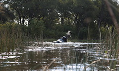 Elephant Spy Shot III (www.mattprior.co.uk) Tags: adventure adventurer journey explore experience expedition safari africa southafrica botswana zimbabwe zambia overland nature animals lion crocodile zebra buffalo camp sleep elephant giraffe leopard sunrise sunset