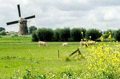 20160717-20160717_Kinderdijk_1316.jpg (HansvdL) Tags: kinderdijk arlene molens
