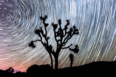 Joshua Tree Star Trail Silhouette (jnthorpe) Tags: star trails joshua tree silhouette long exposure national park night photography