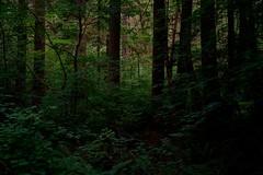 Solitude (Alvin Harp) Tags: trees forest green naturesbeauty nature naturepix may 2016 sonyilce7rm2 teamsony sonya7rii fe24240mm alvinharp