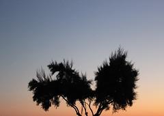 JOUR 197 : Sunset (Anne-Christelle) Tags: sunset coucherdesoleil paysage extrieur soir arbre ciel sky larochelle charentemaritime projet365 365project