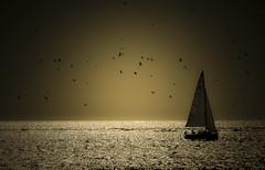 Peniche (Tiago Lourenco) Tags: peniche sunset boat barco praia de supertubos silhuetas