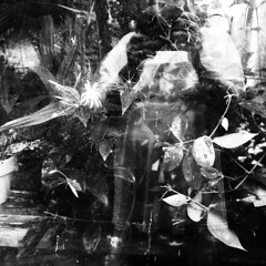 through the glass darkly (bunchadogs & susan [mostly off]) Tags: iphone provokecameraapp dusk inthroughthegreenhousewindow fortunacalifornia
