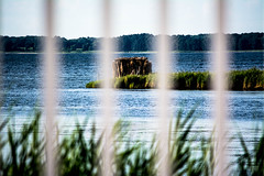 through the rails (-gregg-) Tags: kent island maryland water bay rails bokeh