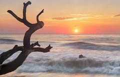 Sunrise on the Boneyard (Charles Opper) Tags: boneyardbeach boneyardjourneys canon georgia jekyllisland spring clouds coast color dawn driftwood landscape light nature seascape shore sky sunrise water waves