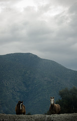 II (Jonhatan Photography) Tags: chile horses nature canon explorer