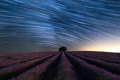 Startrail over lavender field (Prad0) Tags: lavanda startrail arbol brihuega lavender stars estrellas purple magenta morado night nightscape noche nocturna
