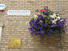 24/7/2016, 206/365, Leading to the High Street IMG_3133 (tomylees) Tags: baileys gant george yard hanging basket braintree essex project 365 july sunday 2016 24th