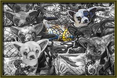 Talavera  Mexican Cat (Sugardxn) Tags: arizona southwest yellow cat photoshop canon cutout frames feline az mexican frame pottery talavera tubac spotcolor picswithframes canoneos7d canon7d spotpainted sugardxn garypentin