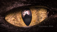 Cat's Eye (a2roland) Tags: normanzeba2rolandyahoocoma2roland cat eye close up feline cornea iris retina lens pupil light macro membrane details reflection shadow view perspective flicker photo picture pics nikon camera d5500 micro