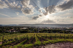 the classic view (dadiolli) Tags: trier aussicht petrisberg view weinberg wine sun sonne hdr