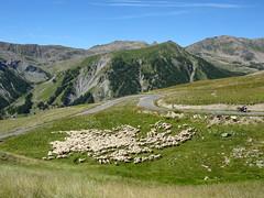 dans le col de Restefond (3) (b.four) Tags: montagna montagne mountain colderestefond troupeau hautetine alpesmaritimes flock gregge ruby5
