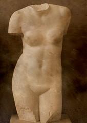 Classical Statues (Chris Draper) Tags: torso female classical greek roman statue statues cambridge museumofclassicalarchaelogy naturallight soft softlight sepia victorian cast casts light shadow historical archaeology