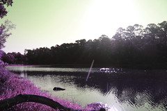 Rivers and roads (someoneandthewhale) Tags: forest pink purple magenta plants fantasy unreal road lake trail exploring adventure other planet methane