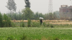 DSC08275 (Kodak Agfa) Tags: countryside farmers photos egypt farms peasants citizenjournalism niledelta sharkia governorates