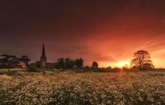 Meadow Sunrise (Captain Nikon) Tags: sunrise derbyshire meadow wildflowers atmospheric sawley cowparsley allsaintschurch sigma1020mmf4 nikond7000