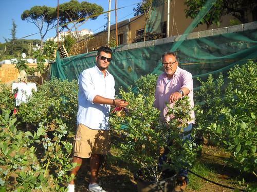Talal & Fouad picking Blueberries b Apr 27, 2014