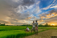 DHARMANAGAR DIARY 2015 (Imaginary-GK Dutta Photography) Tags: people india green village natural northeast imaginary gk northindia tripura northeastindia paddyland gkdutta gksimaginary gkduttaphotography tribesoftripura tribalpeopleoftripura naturalphotooftripura