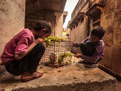 Snacks Time - Bengaluru, India (Kartik Kumar S) Tags: bangalore bengaluru karnataka kids children street photography canon 600d pet rabbit people places