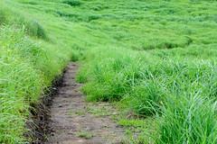23Tonomine Highland (anglo10) Tags:    field  japan