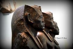 Statues of Senwosret III (Sumer and Akkad!) Tags: ramesses amenhotep abydos karnak thebes egypt statue pharaoh cobra vulture osiris isis sphinx ram falsedoor stele cat britishmuseum british museum bloomsbury london hathor luxor philae ptolemaicperiod middlekingdom newkingdom lateperiod ahmose thutmose giza saqqara memphis