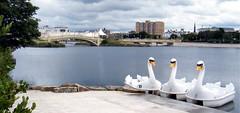 Southport, Lancashire, England, swan boats on lake (rossendale2016) Tags: pedalos lake pedal boat swan lancashire england southport