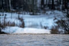On My Way (Jori Samonen) Tags: path road winter ice snow sticks trees viikki helsinki finland