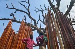 Gossiping (ashik mahmud 1847) Tags: bangladesh d5100 nikkor people sky wood line patter texture true blue man