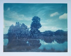 This Is Florida (dreamscapesxx) Tags: polaroid peelapart instant supershooter polaroid669film expired cowcountry cowpasture lake trees country middleofnowhere amazingsky clouds plantcityfl snapitseeit